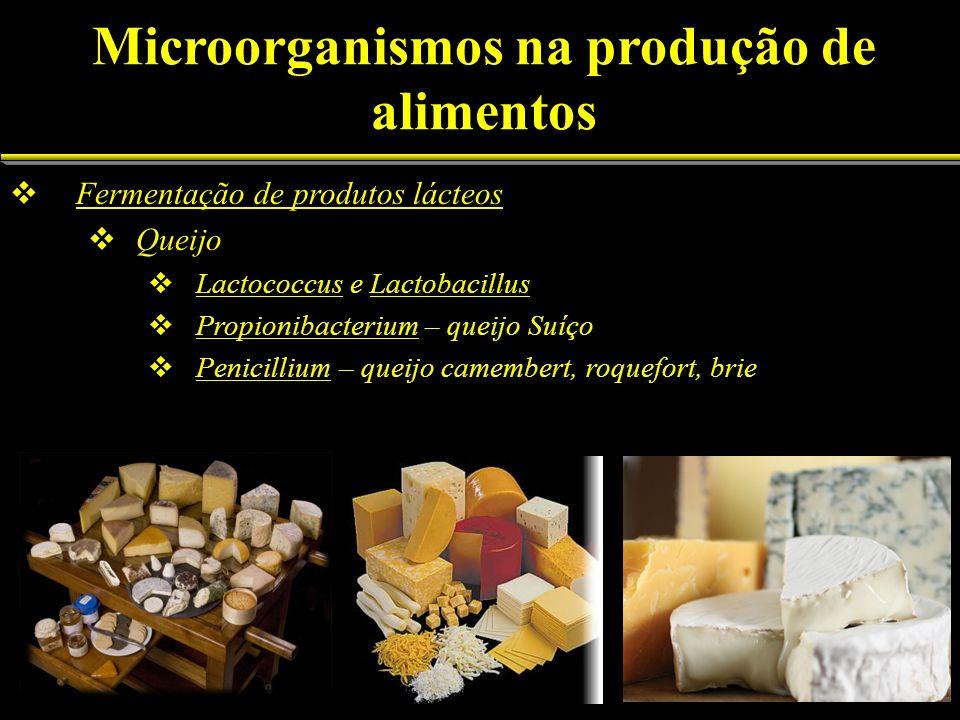 Fermentação de produtos lácteos Queijo Lactococcus e Lactobacillus Propionibacterium – queijo Suíço Penicillium – queijo camembert, roquefort, brie Mi