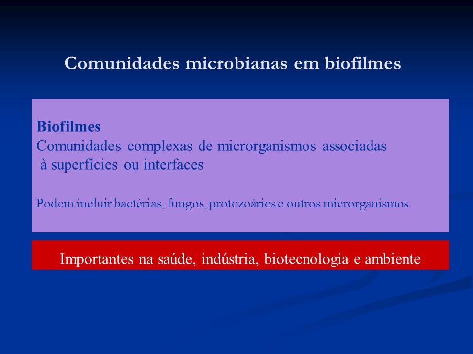 Comunidades microbianas em biofilmes Biofilmes Comunidades complexas de microrganismos associadas à superfícies ou interfaces Podem incluir bactérias,