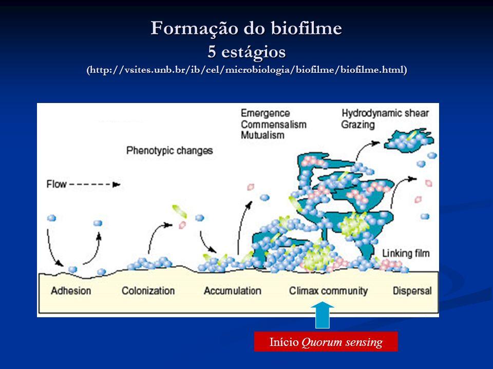 Formação do biofilme 5 estágios ( http://vsites.unb.br/ib/cel/microbiologia/biofilme/biofilme.html) Início Quorum sensing
