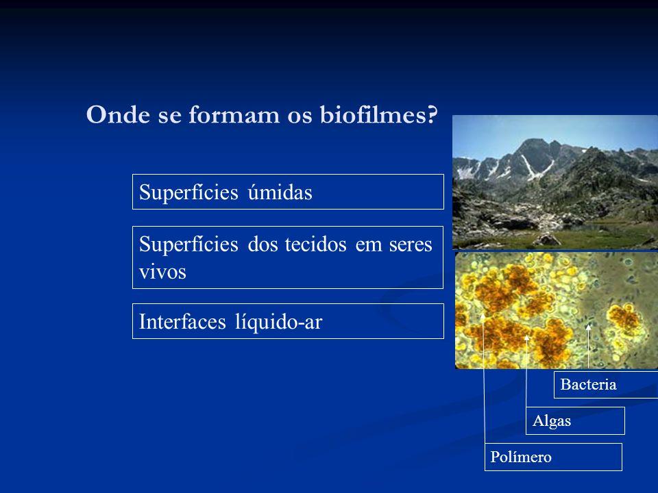 Onde se formam os biofilmes? Superfícies úmidas Superfícies dos tecidos em seres vivos Interfaces líquido-ar Algas Bacteria Polímero