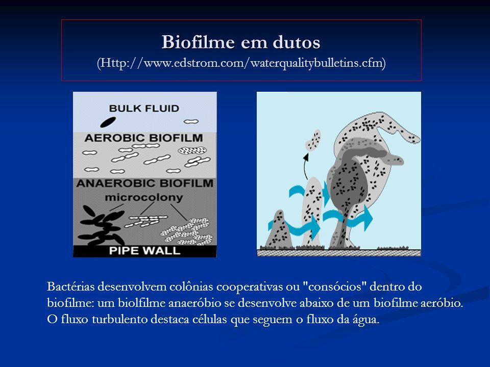 Biofilme em dutos Biofilme em dutos (Http://www.edstrom.com/waterqualitybulletins.cfm) Bactérias desenvolvem colônias cooperativas ou