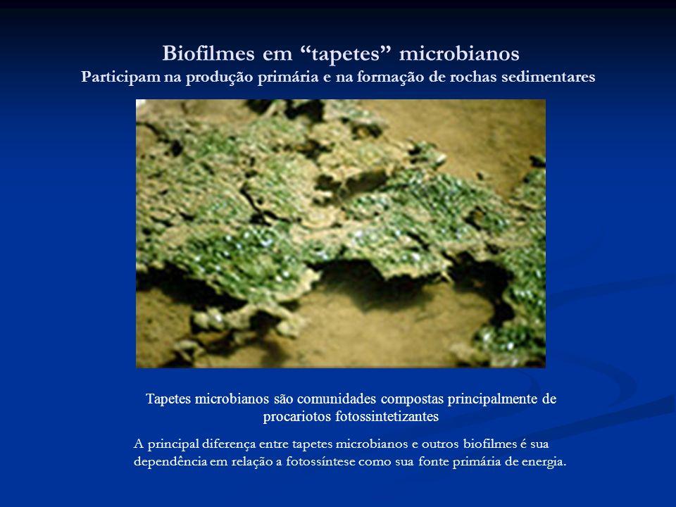 Biofilmes em tapetes microbianos Participam na produção primária e na formação de rochas sedimentares Tapetes microbianos são comunidades compostas pr