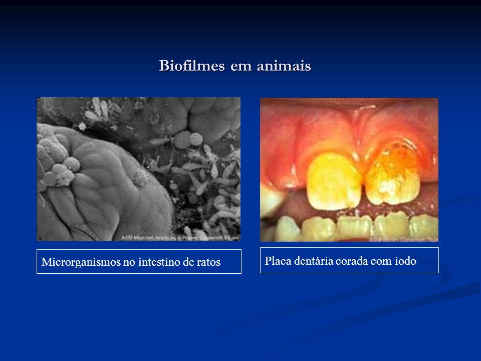 Biofilmes em animais Microrganismos no intestino de ratos Placa dentária corada com iodo
