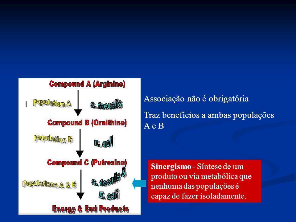 Associação não é obrigatória Traz benefícios a ambas populações A e B Sinergismo - Síntese de um produto ou via metabólica que nenhuma das populações