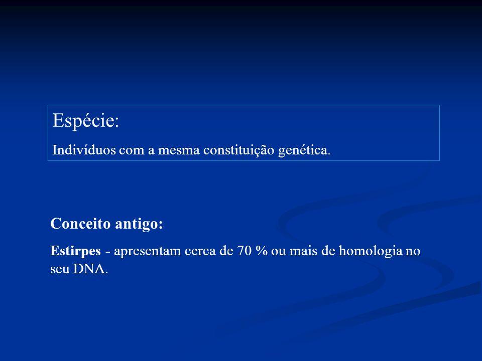 Espécie: Indivíduos com a mesma constituição genética. Conceito antigo: Estirpes - apresentam cerca de 70 % ou mais de homologia no seu DNA.