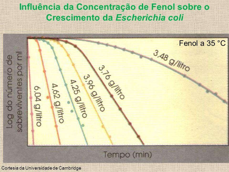 Influência da Concentração de Fenol sobre o Crescimento da Escherichia coli Cortesia da Universidade de Cambridge Fenol a 35 °C