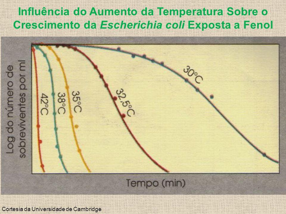 Cortesia da Universidade de Cambridge Influência do Aumento da Temperatura Sobre o Crescimento da Escherichia coli Exposta a Fenol