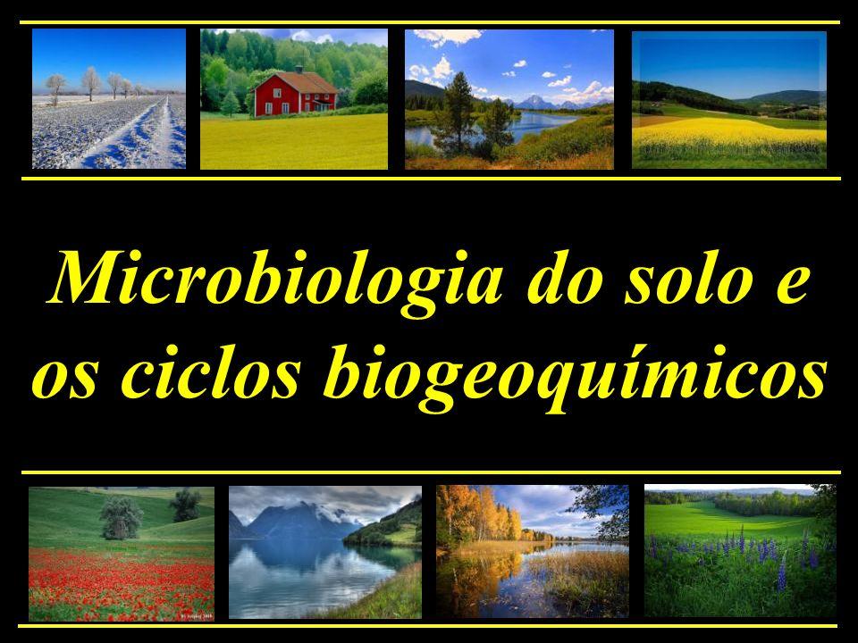 O ciclo do Fósforo O ciclo do fósforo tem 2 componentes principais que ocorrem em diferentes escalas de tempo: No componente local ele cicla nos ecossistemas em tempo ecológico Nos sedimentos ele faz parte da porção classificada em tempo geológico.