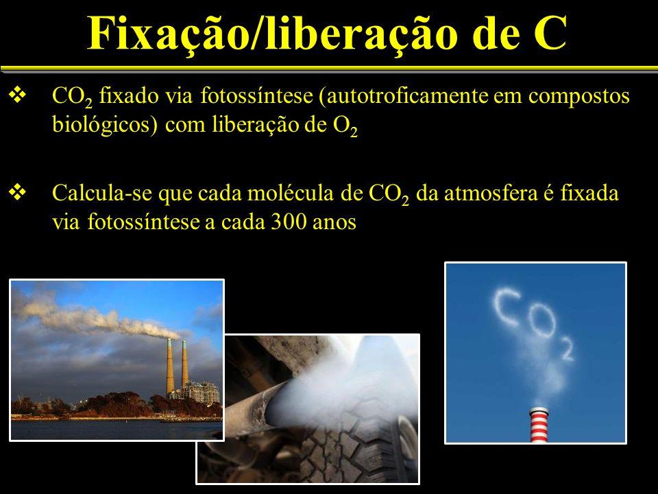 Fixação/liberação de C CO 2 fixado via fotossíntese (autotroficamente em compostos biológicos) com liberação de O 2 Calcula-se que cada molécula de CO 2 da atmosfera é fixada via fotossíntese a cada 300 anos