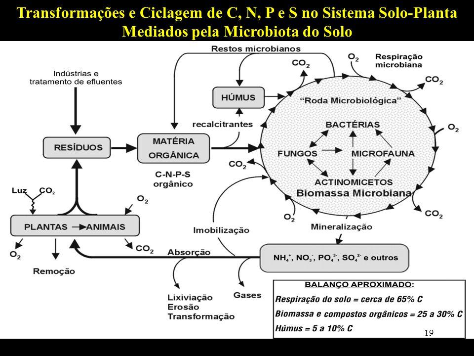 Moreira & Siqueira, 2006 Transformações e Ciclagem de C, N, P e S no Sistema Solo-Planta Mediados pela Microbiota do Solo 19