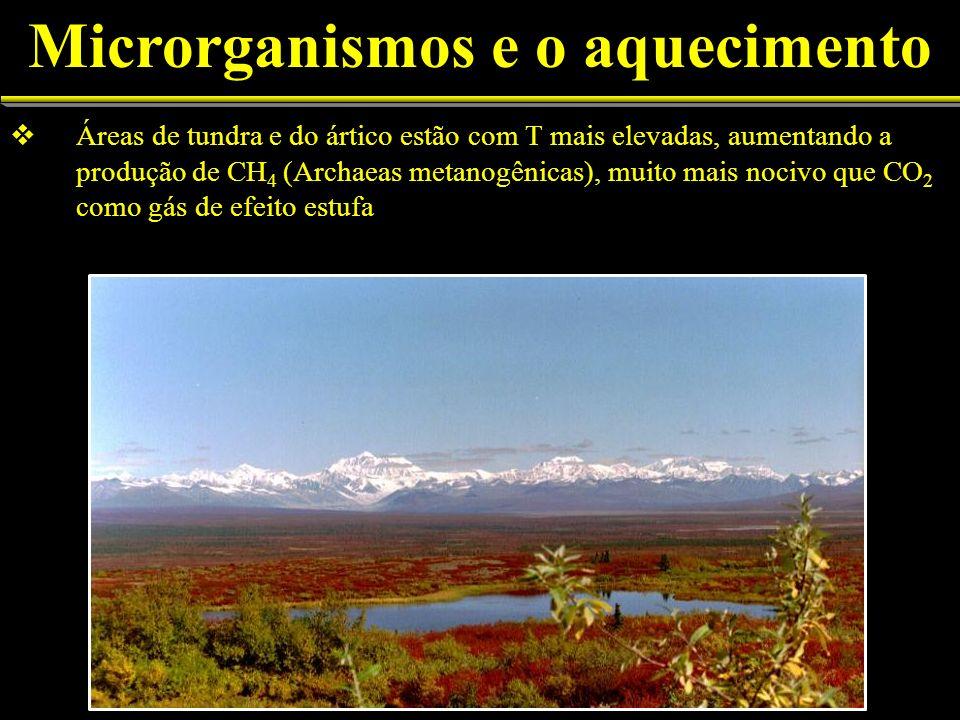 Áreas de tundra e do ártico estão com T mais elevadas, aumentando a produção de CH 4 (Archaeas metanogênicas), muito mais nocivo que CO 2 como gás de