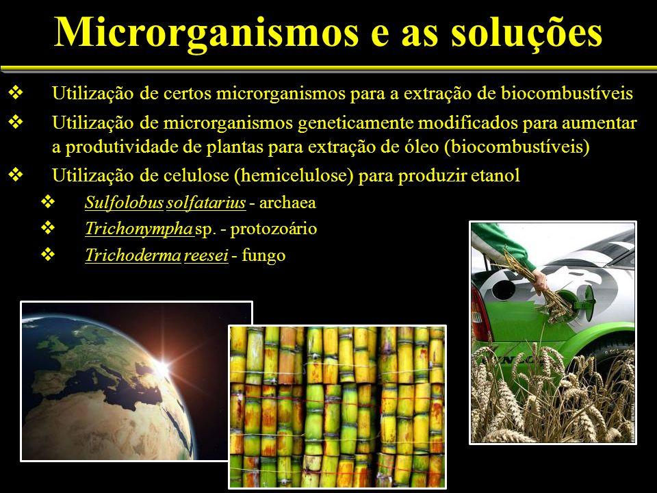 Utilização de certos microrganismos para a extração de biocombustíveis Utilização de microrganismos geneticamente modificados para aumentar a produtividade de plantas para extração de óleo (biocombustíveis) Utilização de celulose (hemicelulose) para produzir etanol Sulfolobus solfatarius - archaea Trichonympha sp.