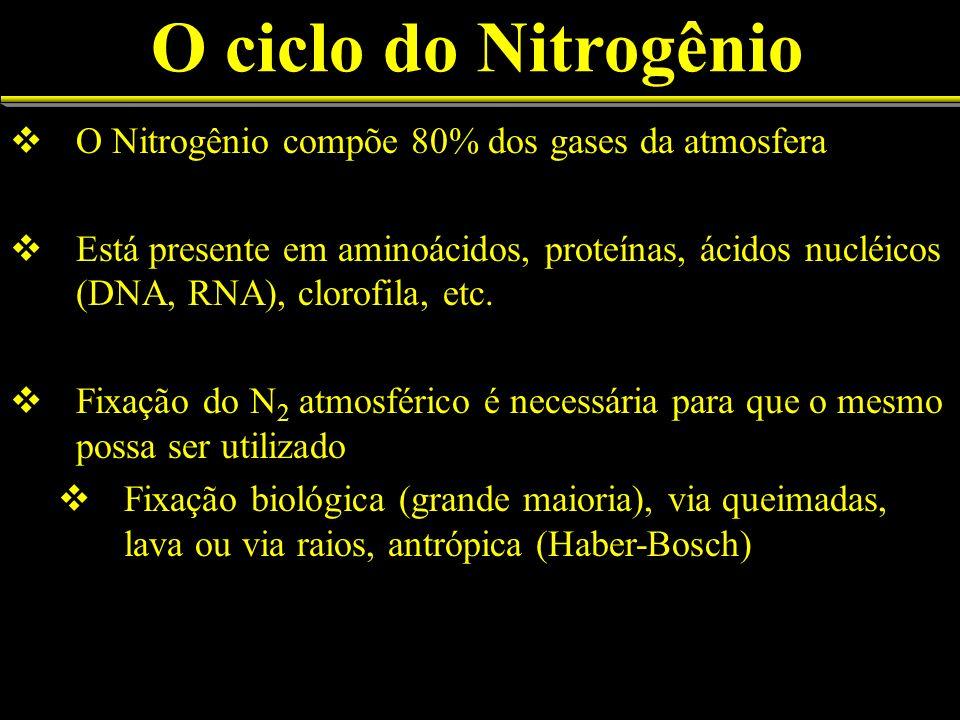 O ciclo do Nitrogênio O Nitrogênio compõe 80% dos gases da atmosfera Está presente em aminoácidos, proteínas, ácidos nucléicos (DNA, RNA), clorofila, etc.