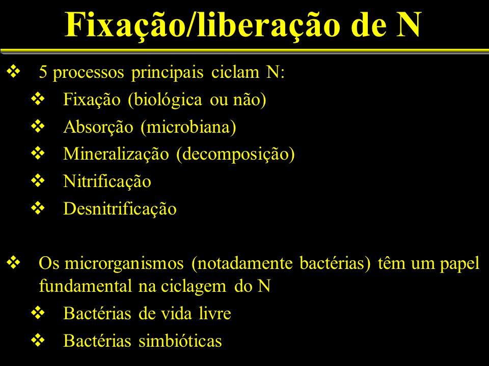 Fixação/liberação de N 5 processos principais ciclam N: Fixação (biológica ou não) Absorção (microbiana) Mineralização (decomposição) Nitrificação Desnitrificação Os microrganismos (notadamente bactérias) têm um papel fundamental na ciclagem do N Bactérias de vida livre Bactérias simbióticas