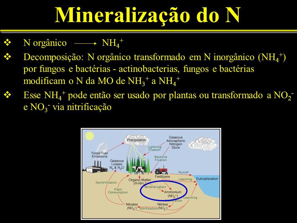 Mineralização do N N orgânico NH 4 + Decomposição: N orgânico transformado em N inorgânico (NH 4 + ) por fungos e bactérias - actinobacterias, fungos e bactérias modificam o N da MO de NH 3 + a NH 4 + Esse NH 4 + pode então ser usado por plantas ou transformado a NO 2 - e NO 3 - via nitrificação