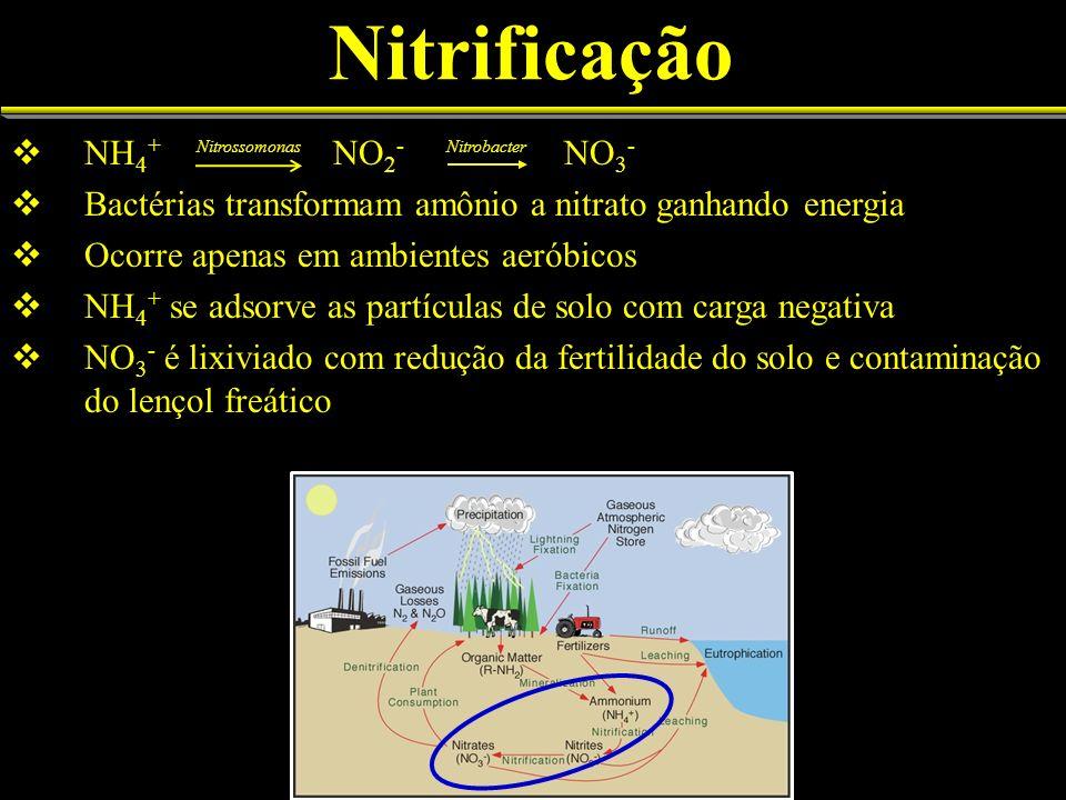 Nitrificação NH 4 + NO 2 - NO 3 - Bactérias transformam amônio a nitrato ganhando energia Ocorre apenas em ambientes aeróbicos NH 4 + se adsorve as partículas de solo com carga negativa NO 3 - é lixiviado com redução da fertilidade do solo e contaminação do lençol freático Nitrossomonas Nitrobacter