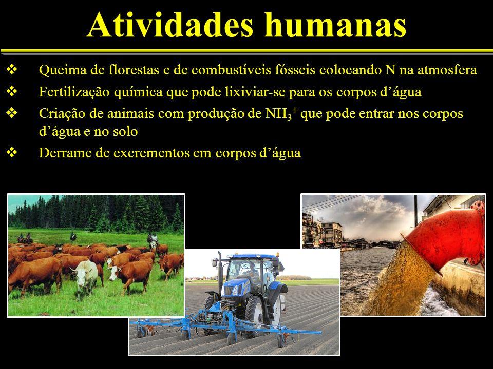 Atividades humanas Queima de florestas e de combustíveis fósseis colocando N na atmosfera Fertilização química que pode lixiviar-se para os corpos dág