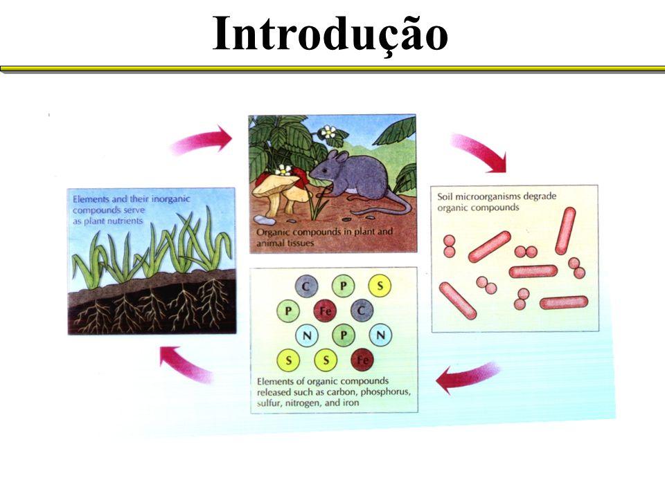 (Fonte: Microbiologia de Brock, Madigan et al.) O ambiente solo
