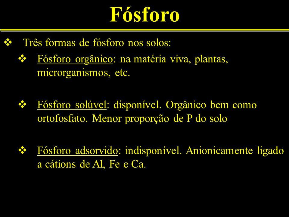 Fósforo Três formas de fósforo nos solos: Fósforo orgânico: na matéria viva, plantas, microrganismos, etc. Fósforo solúvel: disponível. Orgânico bem c