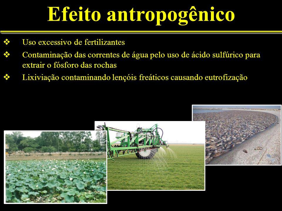Uso excessivo de fertilizantes Contaminação das correntes de água pelo uso de ácido sulfúrico para extrair o fósforo das rochas Lixiviação contaminando lençóis freáticos causando eutrofização Efeito antropogênico