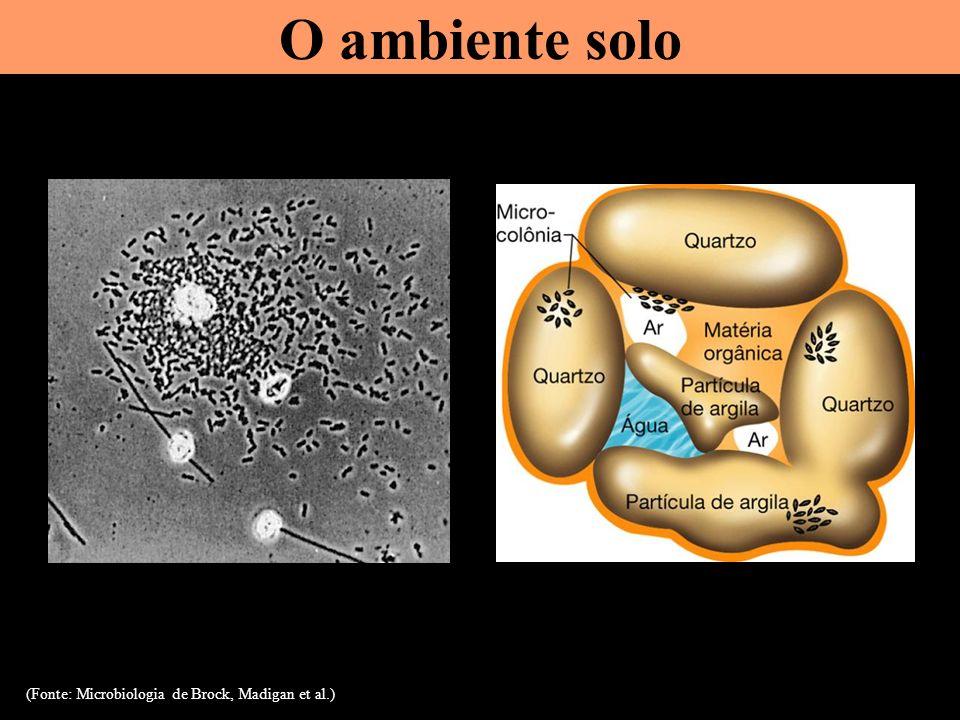 Desnitrificação NO 3 - NO 2 - NO N 2 O N 2 Processo anaeróbico feito por bactérias desnitrificadoras N 2 O é um gás de efeito estufa Esta é a única transformação que remove N dos ecossistemas (irreversível) e faz o balanço do ciclo do N