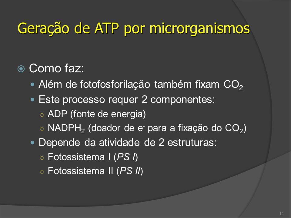 Como faz: Além de fotofosforilação também fixam CO 2 Este processo requer 2 componentes: ADP (fonte de energia) NADPH 2 (doador de e - para a fixação