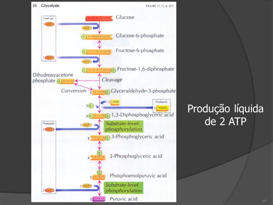19 Produção líquida de 2 ATP