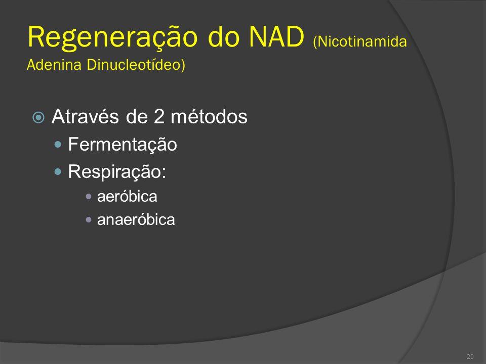 Regeneração do NAD (Nicotinamida Adenina Dinucleotídeo) Através de 2 métodos Fermentação Respiração: aeróbica anaeróbica 20