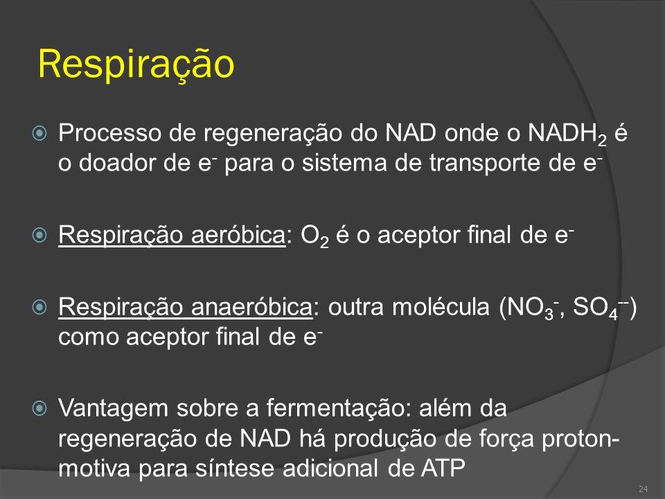 Respiração Processo de regeneração do NAD onde o NADH 2 é o doador de e - para o sistema de transporte de e - Respiração aeróbica: O 2 é o aceptor fin