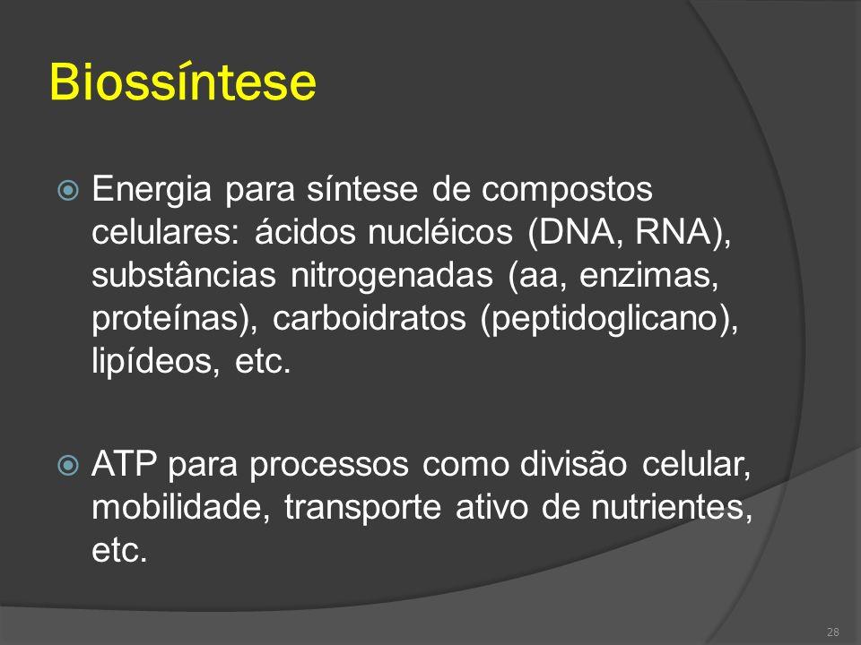 Biossíntese Energia para síntese de compostos celulares: ácidos nucléicos (DNA, RNA), substâncias nitrogenadas (aa, enzimas, proteínas), carboidratos