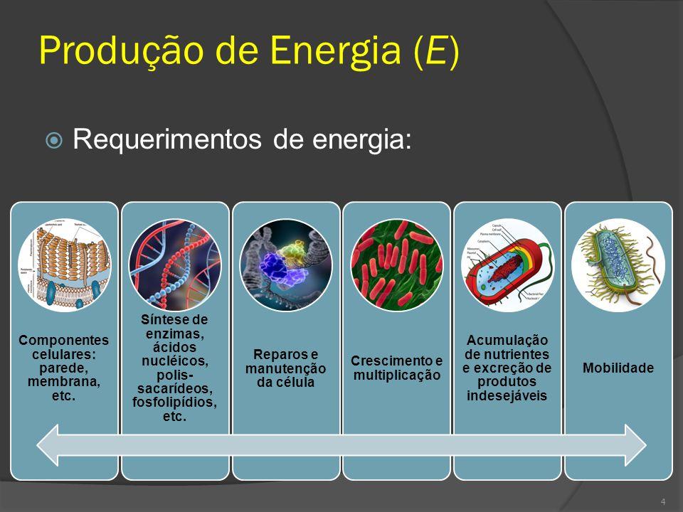 Requerimentos de energia: Componentes celulares: parede, membrana, etc. Síntese de enzimas, ácidos nucléicos, polis- sacarídeos, fosfolipídios, etc. R