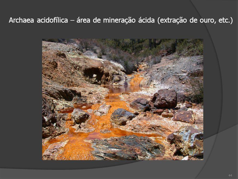 44 Archaea acidofílica – área de mineração ácida (extração de ouro, etc.)