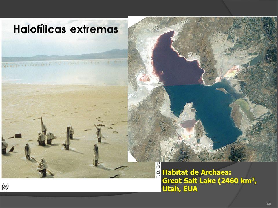 Habitat de Archaea: Great Salt Lake (2460 km 2, Utah, EUA Halofílicas extremas 60