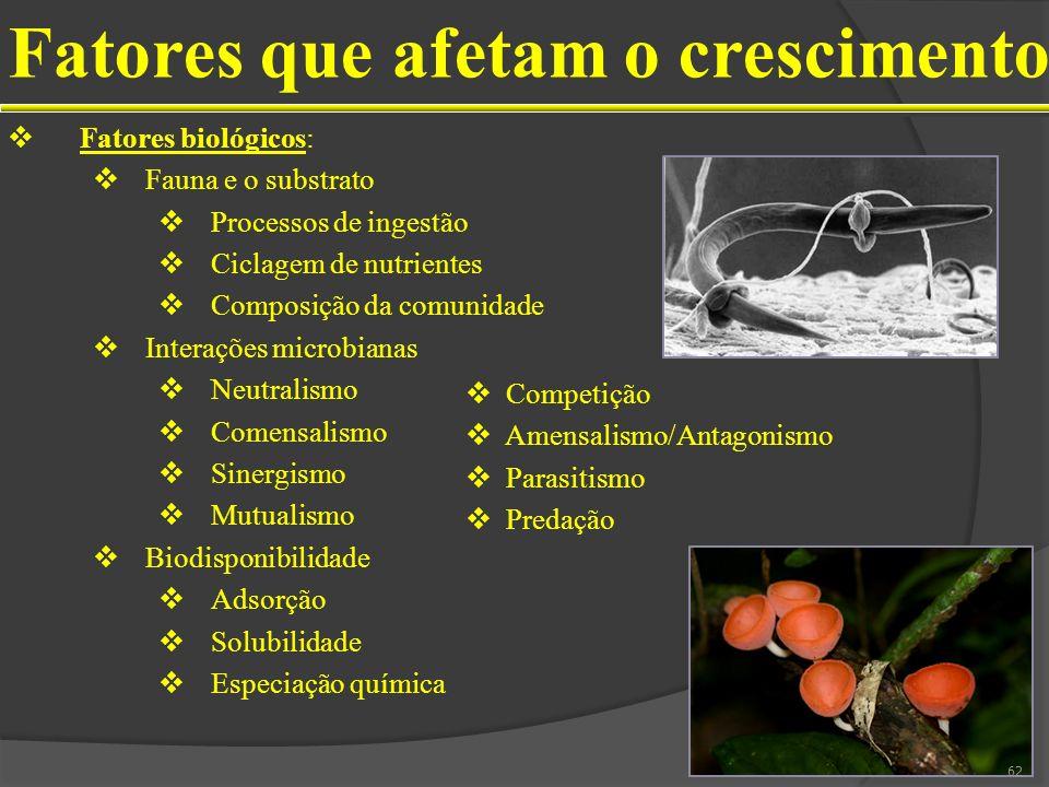 Fatores que afetam o crescimento Fatores biológicos: Fauna e o substrato Processos de ingestão Ciclagem de nutrientes Composição da comunidade Interaç