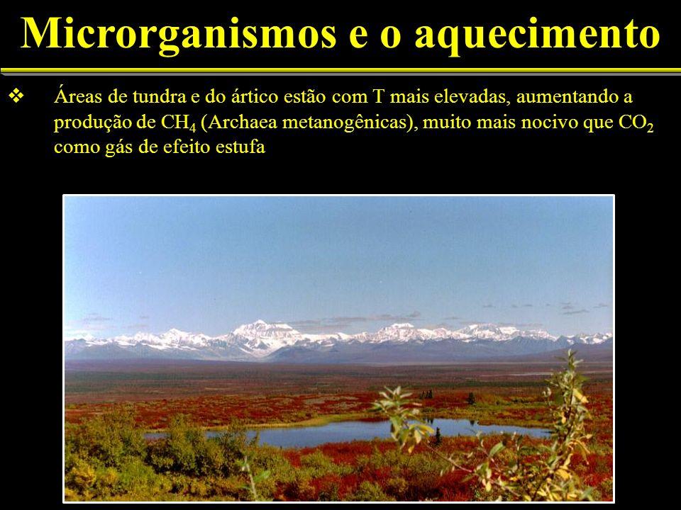 Áreas de tundra e do ártico estão com T mais elevadas, aumentando a produção de CH 4 (Archaea metanogênicas), muito mais nocivo que CO 2 como gás de e