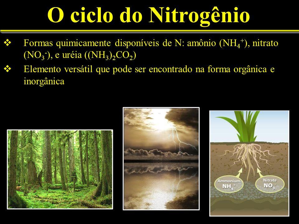 O ciclo do Nitrogênio Formas quimicamente disponíveis de N: amônio (NH 4 + ), nitrato (NO 3 - ), e uréia ((NH 3 ) 2 CO 2 ) Elemento versátil que pode