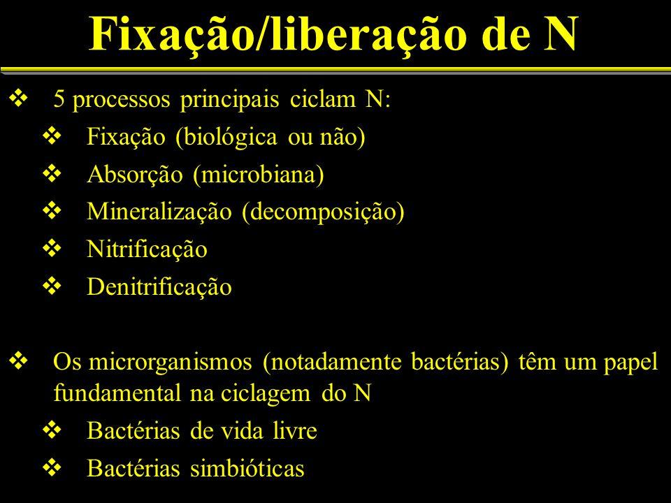 Fixação/liberação de N 5 processos principais ciclam N: Fixação (biológica ou não) Absorção (microbiana) Mineralização (decomposição) Nitrificação Den
