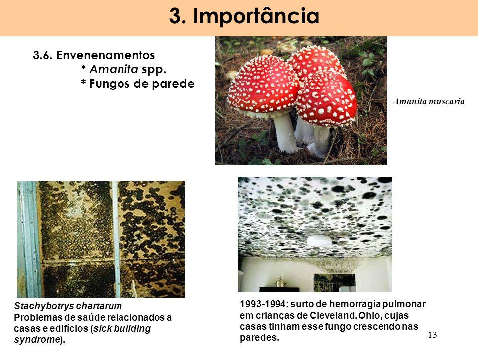 3.6. Envenenamentos * Amanita spp. * Fungos de parede 3. Importância 13 Stachybotrys chartarum Problemas de saúde relacionados a casas e edifícios (si