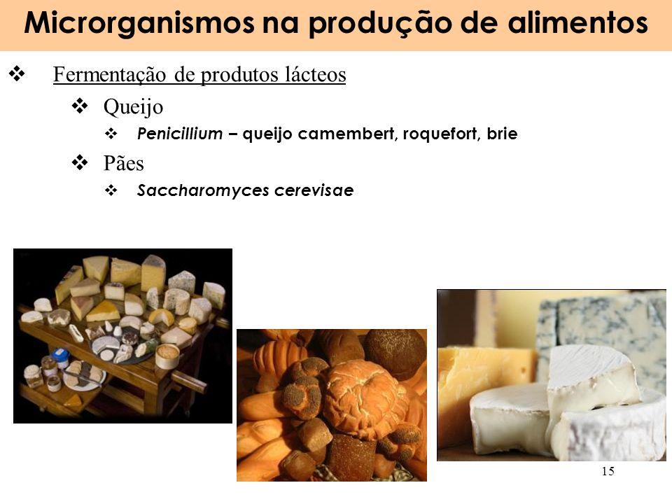 Microrganismos na produção de alimentos 15 Fermentação de produtos lácteos Queijo Penicillium – queijo camembert, roquefort, brie Pães Saccharomyces c