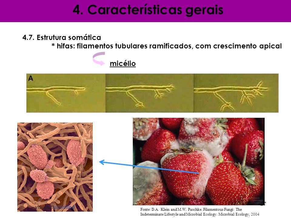 4.7. Estrutura somática * hifas: filamentos tubulares ramificados, com crescimento apical micélio 4. Características gerais 27 Fonte: D.A. Klein and M