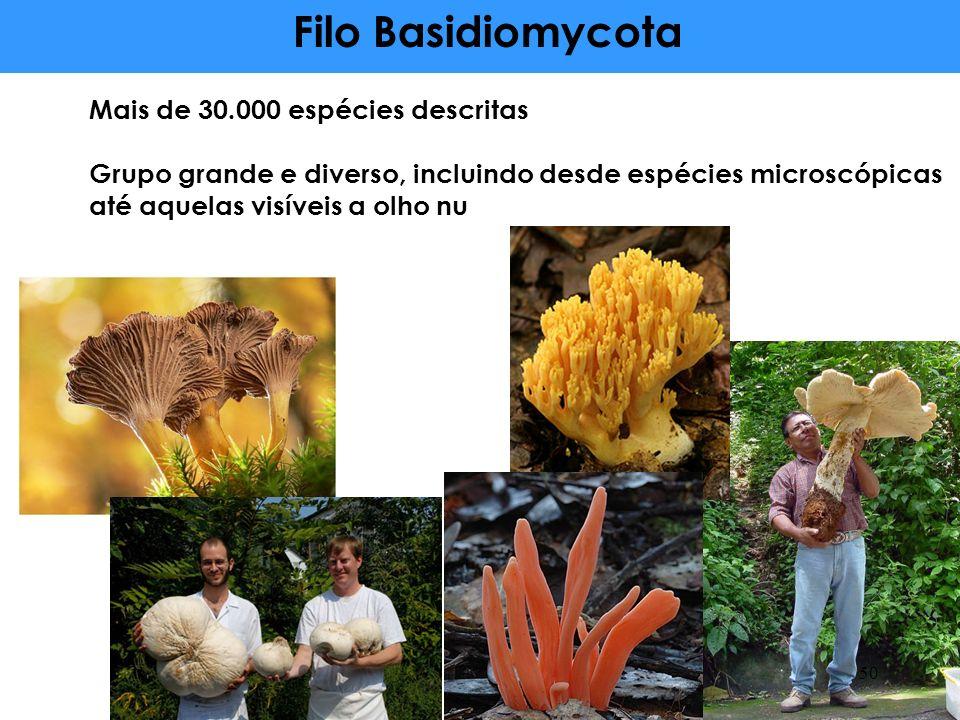 Mais de 30.000 espécies descritas Grupo grande e diverso, incluindo desde espécies microscópicas até aquelas visíveis a olho nu Filo Basidiomycota 50