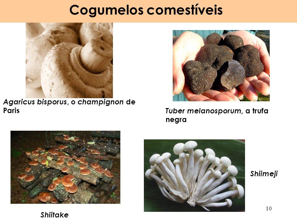 Agaricus bisporus, o champignon de Paris Tuber melanosporum, a trufa negra Cogumelos comestíveis 10 Shiitake Shiimeji