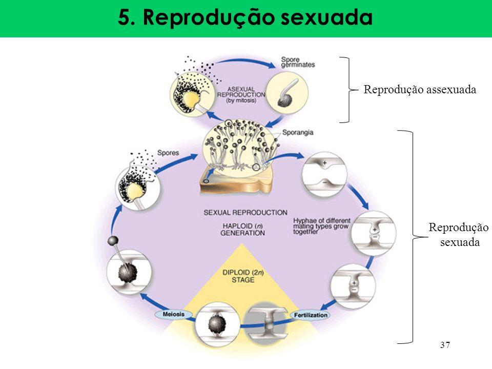 5. Reprodução sexuada 37 Reprodução assexuada Reprodução sexuada