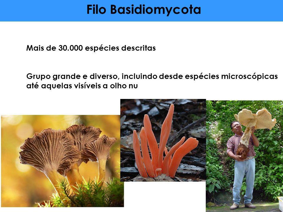 Mais de 30.000 espécies descritas Grupo grande e diverso, incluindo desde espécies microscópicas até aquelas visíveis a olho nu Filo Basidiomycota 46