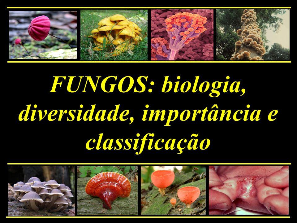 Filo Basidiomycota Características gerais: * esporos sexuais externos: basidiósporos, produzidos em basídios * micélio bem desenvolvido e septado * presença frequente de rizomorfas 62