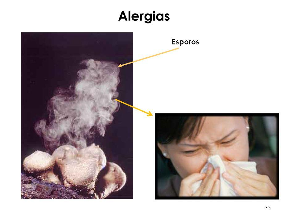 Alergias Esporos 35