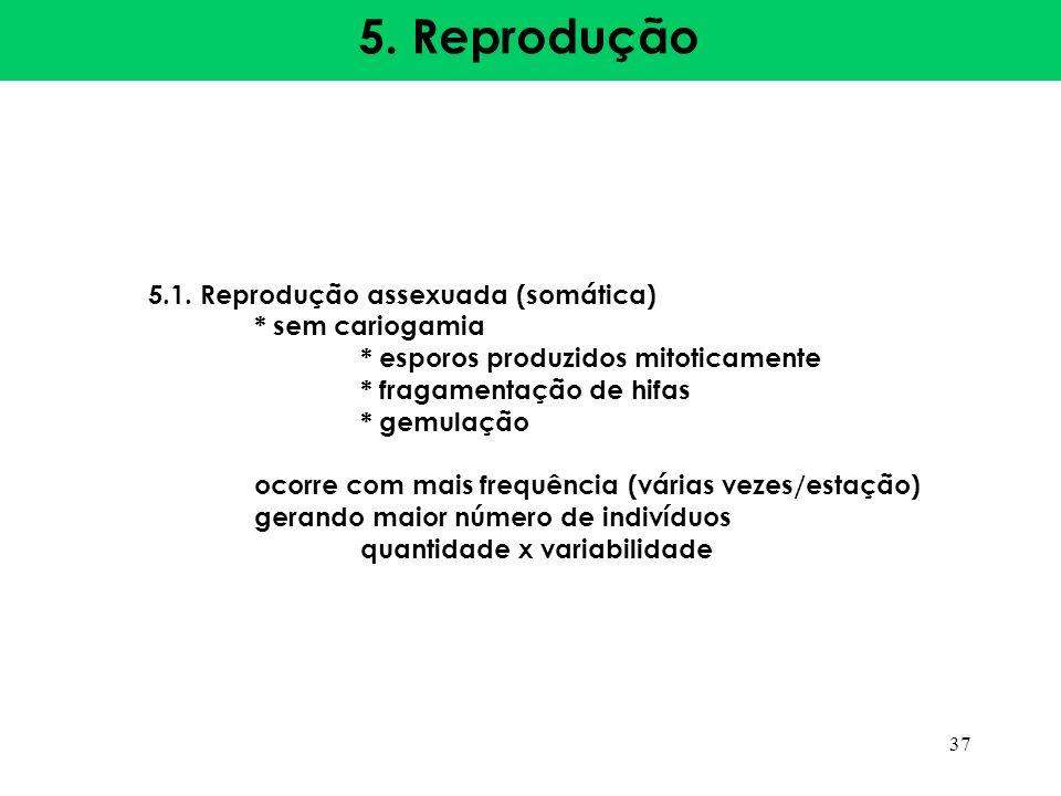 5. Reprodução 5.1. Reprodução assexuada (somática) * sem cariogamia * esporos produzidos mitoticamente * fragamentação de hifas * gemulação ocorre com
