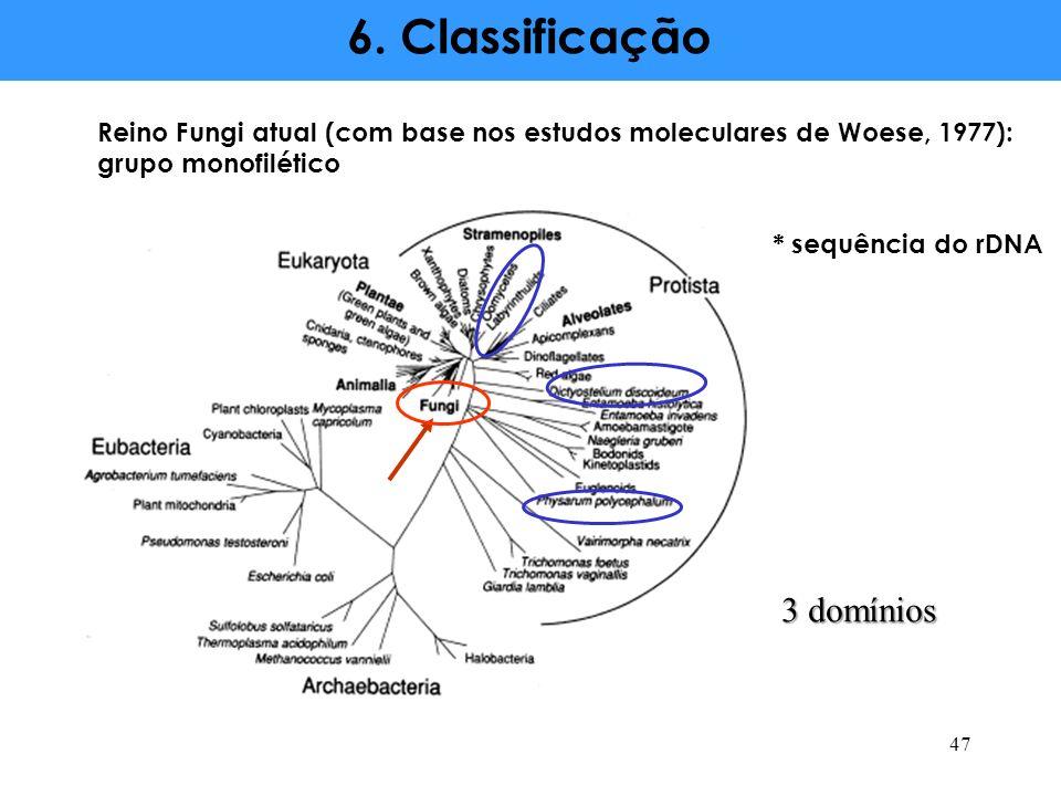 6. Classificação Reino Fungi atual (com base nos estudos moleculares de Woese, 1977): grupo monofilético * sequência do rDNA 47 3 domínios