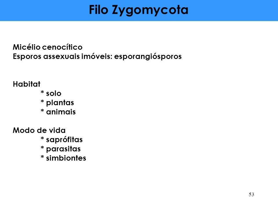 Filo Zygomycota Micélio cenocítico Esporos assexuais imóveis: esporangiósporos Habitat * solo * plantas * animais Modo de vida * saprófitas * parasita