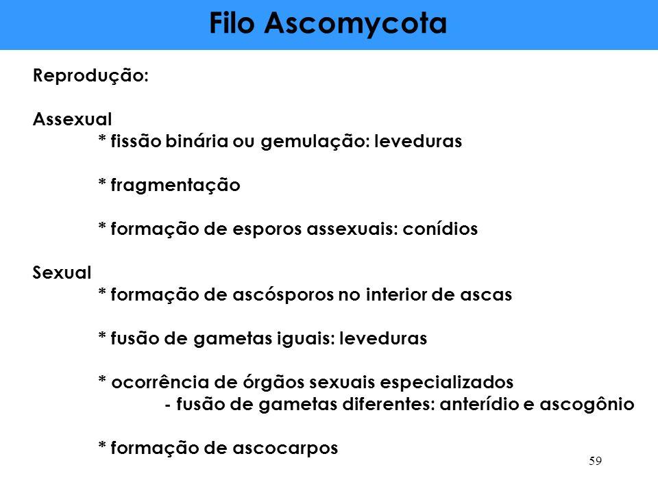 Filo Ascomycota Reprodução: Assexual * fissão binária ou gemulação: leveduras * fragmentação * formação de esporos assexuais: conídios Sexual * formaç